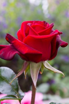 Explore Rose-Beauty photos on Flickr. Rose-Beauty has uploaded 440 photos to Flickr.