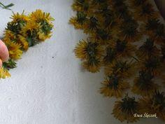 Konserwowanie ziół – metody – Zielicha Leaf Tattoos, How To Dry Basil, Herbs, Herb, Medicinal Plants