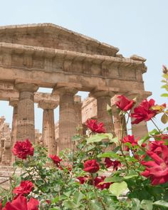 According to the Guinness Book of World Records, roses are the oldest species of plant to be grown as decoration. Ancient Romans cultivated the flowers to decorate buildings and furniture, and even laid rose petal carpets.  - GoodHousekeeping.com