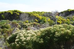Cape Floral Region Protected Areas in Cape Town, Western Cape, South Africa Apartheid Museum, Areas Protegidas, V&a Waterfront, Cape Town South Africa, Kwazulu Natal, Most Beautiful Cities, List, World Heritage Sites, Dream Vacations