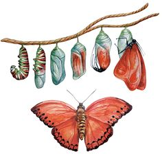 Find Metamorphosis Caterpillar Watercolor Illustration Caterpillar Turns stock images in HD and millions of other royalty-free stock photos, illustrations and vectors in the Shutterstock collection. Thousands of new, high-quality pictures added every day. Metamorphosis Art, Butterfly Metamorphosis, Butterfly Drawing, Science Illustration, Watercolor Illustration, Painting & Drawing, Insect Art, Art Inspo, Art Projects