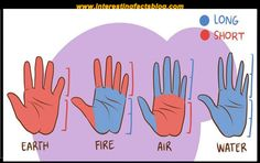Know more information about types of hands and what they mean, types of hand shapes, hand shape and personality, shape of your hand interestingfactsblog.com