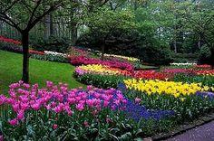 elegir las flores y las plantas para el jardin