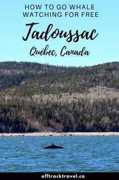 Whale watching in Tadoussac is both incredibly varied and exceptionally easy. We found four fun ways to go whale watching in Tadoussac on our recent visit Road Trip, Old Quebec, Canadian Travel, Visit Canada, Laundry Hacks, Whale Watching, Outdoor Adventures, Travel Goals, Cool Places To Visit