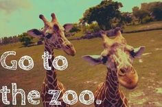 Go to the zoo. ✔️
