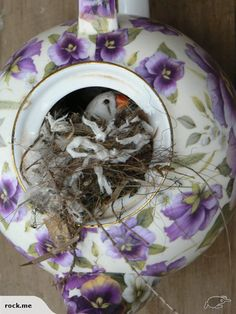 ZEBRA FINCHES FOR AVIARY | Trade Me