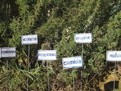 Targhette in ceramica decorata a mano da piantare in giardino o nel vaso con i nomi delle aromatiche. Realizzato in terra semirefrattaria cotta a 1100 gradi e colorata con smalti, ossidi e ingobbi. Colore BIANCO, scritte in blu, verde. Puoi richedere il nome delle erbe aromatiche che vuoi, verrà fatto per te. Dimens. cm 8x4H . Il ferro utilizzato per gli oggetti da piantare in giardino non è trattato. Nel retro incavo per posizionare il ferro di sostegno. Ferro lungo 32cm circa ...