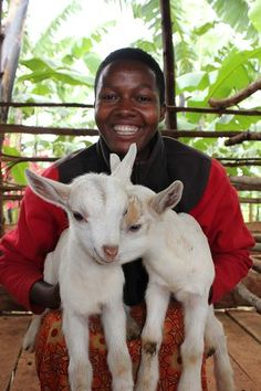 Heifer International- give the gift of chicks $20, bees $30, rabbits $60, pigs $120, sheep $120, goats $120, llamas $150, water buffaloes $250, heifers $500, alpacas $150, ducks $20, geese $20, tree seedlings $60, stoves for a village $1000, bioga stove $50, 3 schools of fish $300, share of fish $30,