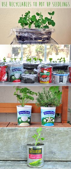 We love seed starting projects! Last year, we had an indoor seed starting garden, and this year, we've used all sorts of recyclable items to pot up seeds. This is a great kids craft - especially for STEM requirements. we know stuff   Use Recyclables To Pot Up Seedlings   http://www.weknowstuff.us.com