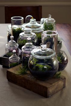 Natural table styling: air plants, succulents, water plants. Via At The Corner Down The Street