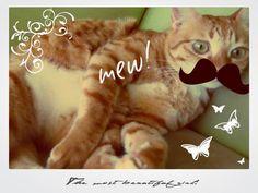 「ヒゲ猫ちゃん」猫ちゃんの写真をちょっと加工してみました♪ #cat #ねこ