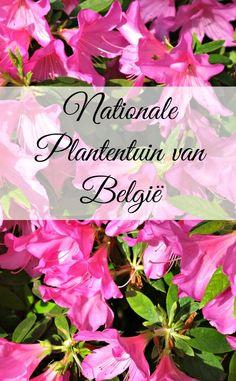 De Nationale Plantentuin in Meise, nabij Brussel, kent een lange geschiedenis. Ze is het hele jaar door open en biedt goede wandelmogelijkheden in haar 92 ha groot domein.
