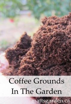 Sprinkle coffee grounds around your vegetables before you water them, you will be activating slow-release nitrogen that will help them grow faster and fuller. - adventureideaz.com