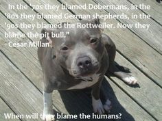 Pitbull stigma. When will humans accept that we are to blame, not the dogs, regardless of breed.