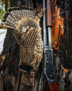Shotguns, Firearms, Grouse Hunting, Hunting Pictures, Shooting Sports, Hunting Guns, Cool Guns, Weapons Guns, Man Stuff
