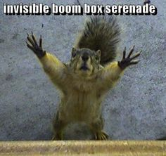 Squirrels are awesome.