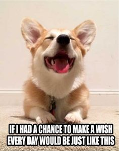 If I had a chance to make a wish, every day would be just like this.