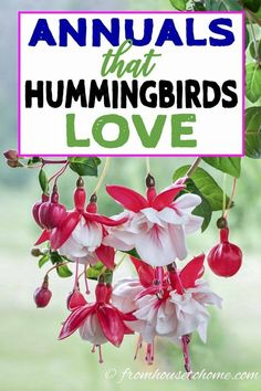 I love these hummingbird plants! So many flowers to choose from that will bloom in spring, summer and fall in my hummingbird garden landscape. Find out which flowers will attract hummingbirds in your garden. Ivy Plants, Shade Plants, Cool Plants, Shade Flowers, Flowering Plants, Fall Flowers, Purple Flowers, Butterfly Flowers, Flower Mandala