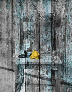 Rustic Wall Art Photography/Rose by LittlePiePhotoArt on Etsy