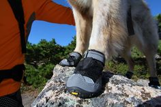 Testing the 2016 Grip Trex Boots: Maria and Riley | blog for outdoor dogs