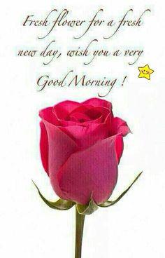 Fresh Flower For A Fresh New Day. Good Morning!