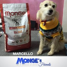 Marcello #Mongesfriends