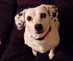 Adoptable Dog of the Day: Mizzy in Nebraska