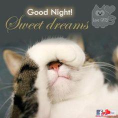 Good Night and Sweet Dreams Good Night Cat, Good Night Thoughts, Good Night Funny, Good Night I Love You, Good Night Prayer, Good Night Friends, Good Night Blessings, Good Night Wishes, Good Night Image
