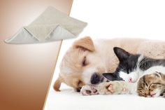 instead of (from Urshu) for a thermal pet bed – keep your pet toasty this winter & save Pet Dogs, Pets, Animal Pictures, Your Pet, Corgi, Colours, Animals, Winter, Places