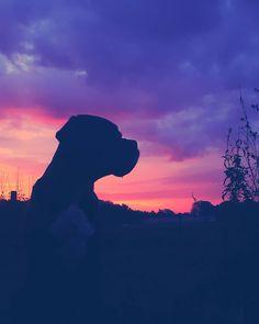 #sonnenaufgang #englischebulldogge #rottweiler #italianomastiff #oldenglishbulldog #photo #pittbull #photography...