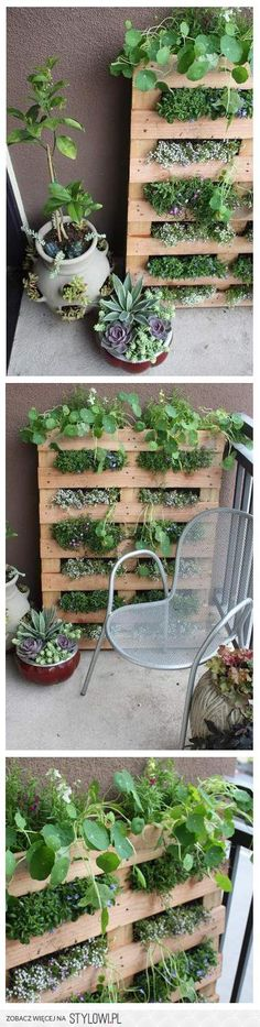 Ogródek na balkonie