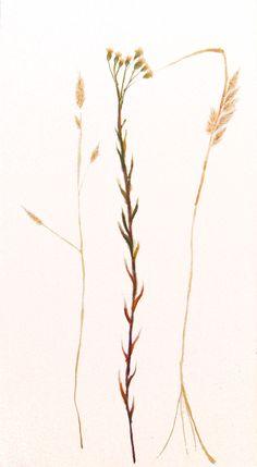 Espigas y flores, 2014. Sumi-e, tintas sobre seda  en soporte rígido de 45 x 24cm. Alesso, Antique China, Silk, Ink, Flowers, Art