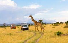 Qatar Airways adds four additional weekly flights between Doha and Nairobi, Kenya Hawaii Destinations, Disney Destinations, Nairobi City, Wildlife Safari, Make Way, Perfect World, Luxor, Travel Agency, Capital City