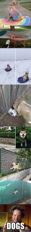 Los perros y sus locuras http://ift.tt/2zntPBf http://ift.tt/2A9V4Ak