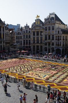 Brussels flower carpet 2012