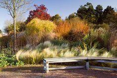 RHS Garden Hyde Hall |Chelmsford, Essex UK...layers of grasses