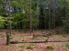 Stuk bos dat mevrouw bij de aankoop van haar huis krijgt.