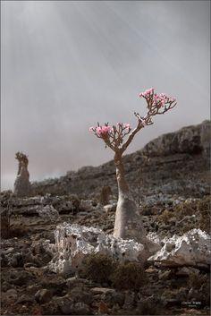 battle tree