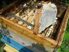 MELISSOCOSMOS: Πόσα κιλά μέλι μπορεί να μαζέψει ένα μελίσσι;