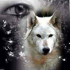 Resultado de imagen para lobos solitarios con frases