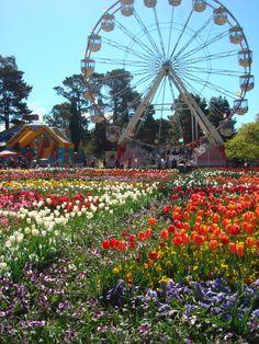 Floriade - Canberra - Australia