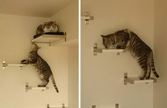 cat shelf! I'm totally doing this on a wall up to our loft area!!