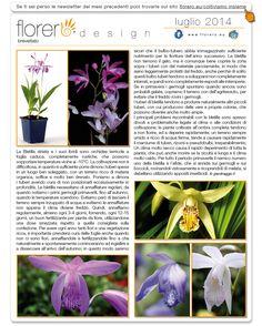 Newsletter Florero Design