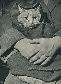20 котов «доинтернетного» периода