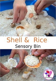 Easy Sensory Play: Shell and Rice Sensory Bin Eyfs Activities, Nursery Activities, Infant Activities, Activities For Kids, Indoor Activities, Baby Sensory Play, Sensory Tubs, Baby Play, Sensory Diet
