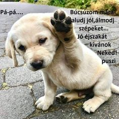 Super Cute Puppies, Baby Animals Super Cute, Cute Baby Dogs, Cute Little Animals, Cute Funny Animals, Little Dogs, Funny Dogs, Adorable Puppies, Cute Little Puppies