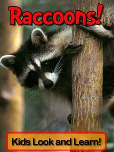 Raccoons! Learn About Raccoons and Enjoy Colorful Pictures - Look and Learn! (50+ Photos of Raccoons) by Becky Wolff, http://www.amazon.com/dp/B008XQMX9O/ref=cm_sw_r_pi_dp_3Ogqtb1MK5TJZ