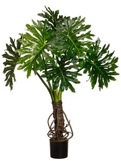 Silk Decor Outdoor Plume Split Leaf Plant, Green ** Check this awesome product by going to the link at the image. (This is an affiliate link and I receive a commission for the sales) Artificial Garden Plants, Artificial Plant Wall, Artificial Tree, Fake Plants, Artificial Flowers, Indoor Plants Low Light, Outdoor Plants, Plants Indoor, House Plants Decor