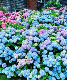 Aesthetic Backgrounds, Aesthetic Wallpapers, Fresh Flowers, Beautiful Flowers, Coastal Gardens, Outdoor Plants, Hydrangeas, Daffodils, Pretty Pictures