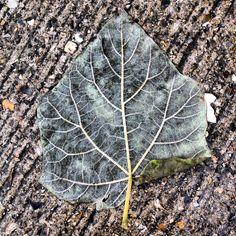 High contrast leaf